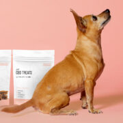 CBD Dog Treats for Anxiety and Stress - Lifestyle 1