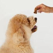 CBD Pet Treats, Heart and Immunity - Lifestyle Photo 1