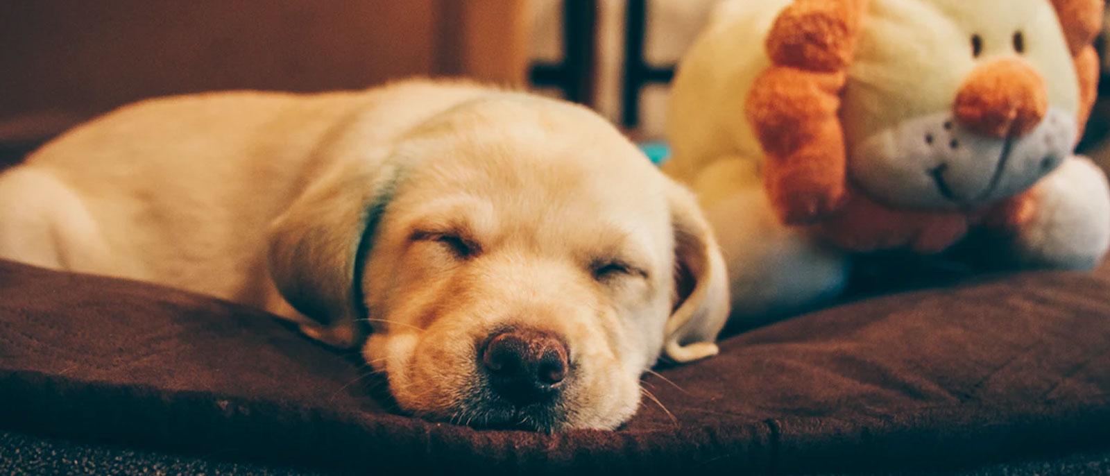 Top 10 Ways to Calm Your Anxious Dog